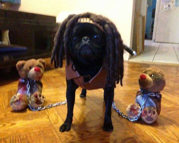 Michonne Dog